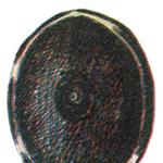 Genji Shield FFIII Art.png