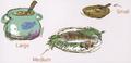 Eiko's meal artwork