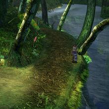Kilika woods2.jpg