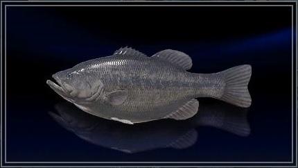 Final Fantasy XV fish
