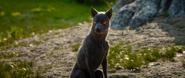 Demon-dog-Omen-FFXV