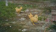 Цыплята чокобо на станции ФФ15