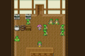 FFV Beginner's Hall