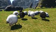 FFXIV Sheep