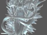 Crystal stasis