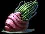 Ammonite (Final Fantasy V)