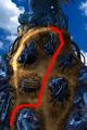 Condor War enemy path 4