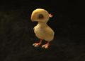 FFXI Chocobo Chick