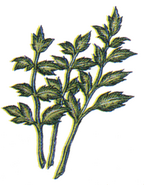 Echo Herbs FFIII Art