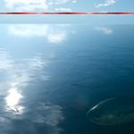Stryrial Bluefin Tuna underwater in FFXV.png