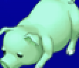 TAY PSP Pig Portrait 5