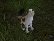 FFXIII-2 Snow the Cat