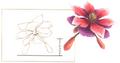DendrobiumArtwork