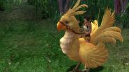 Calli rides Chocobo