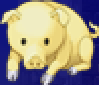 FFIV PSP Mini Pig Portrait