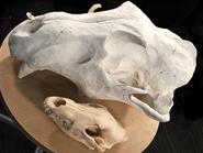 Behemoth-Skull-Sculpture-FFXV