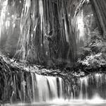 Tenebrae-Tree-Artwork-Edvige-Faini-KGFFXV.png