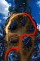 Condor War enemy path 5