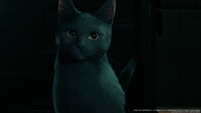 Gray cat in Sector 7 Topside from FFVII Remake