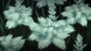 White sylleblossoms in Episode Ardyn Prologue