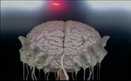 Shido Brain