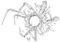 Omega's Horn concept for Final Fantasy Unlimited