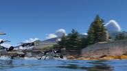 Loons Flying In