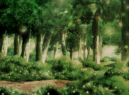 Revived forest