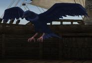 FE9 Raven (Seeker)