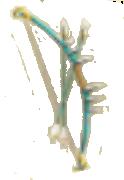 Dragon Arrow