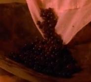 Hodgeberries