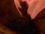 Hodgeberry