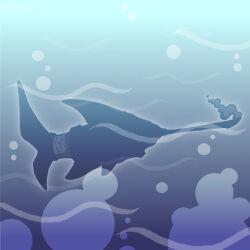Needlenose-shark.jpg