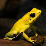 FroggerBotAvatar.png