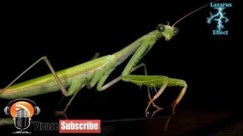 Linda Moulton Howe Preying Mantis Aliens