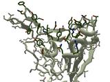 Coronavirus Spike Protein