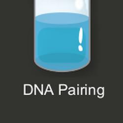 DNA Pairing.png