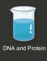 Intro Puzzles/DNA and Protein