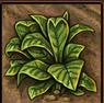 Forschung: Plantagen