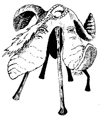 Pentadrone