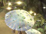 Zabou mushroom