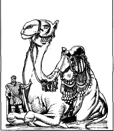 Camel of the Pearl