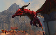Pseudodragon Pet in Neverwinter MMO