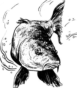 Giant carp