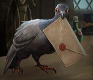 Pigeon wow