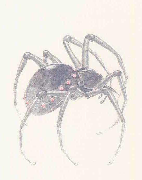 Wraith spider