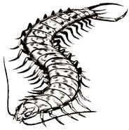 Giantcentipede