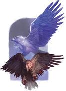 Hawks - Matias Tapia
