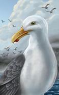 Seagull NWN