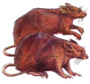 Giant rat 2e